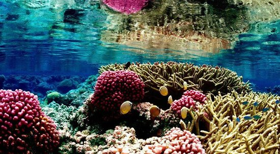 Reef Experience : Great Barrier Reef coral