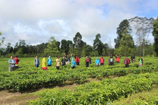 Malabar Tea Plantations