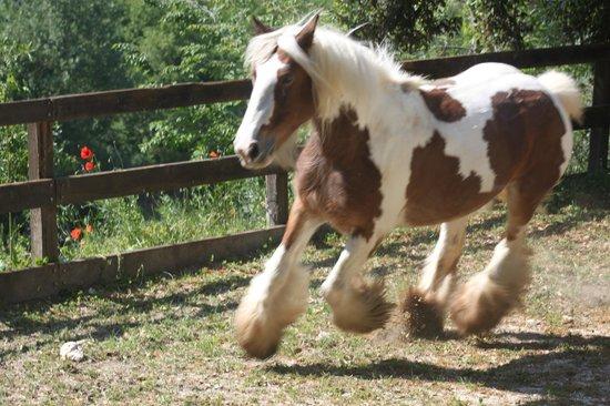 Agriturismo Eremo delle Fate : Roan- una pony stupenda