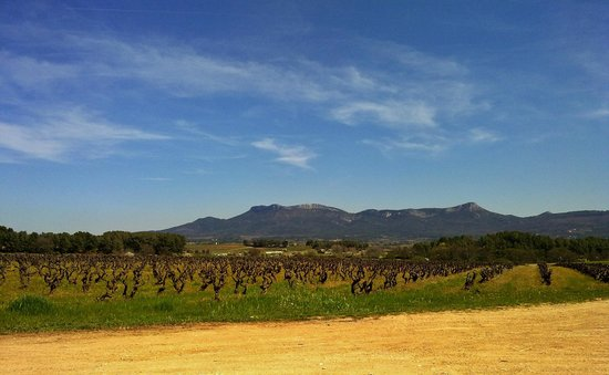 Provence Wine Tours : View from one of the wineyards