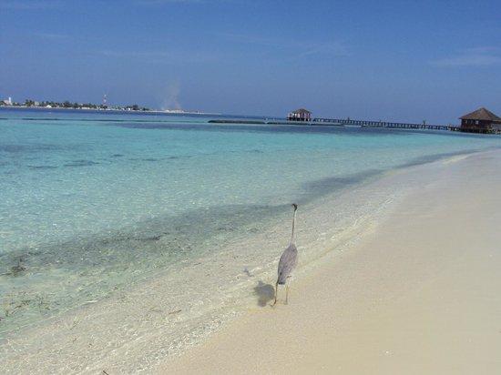 Komandoo Maldives Island Resort: Leeward side of the island