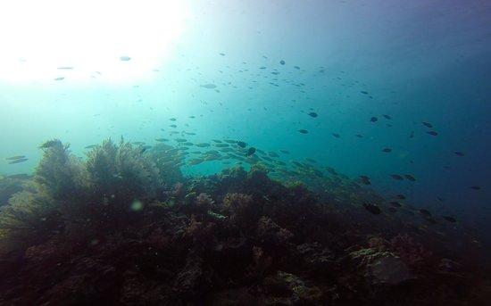 Love Diving Phuket: Phi Phi