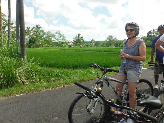 Bali On Bike: gorgeous rice paddys