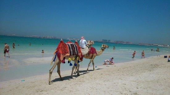 Sofitel Dubai Jumeirah Beach: Пляж