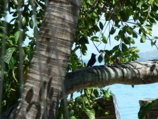 South Sea Island Accommodation: Bird looking out to sea