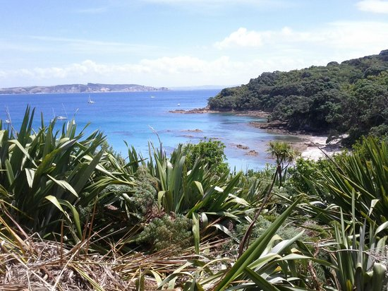Tiritiri Matangi Island: View towards the beach