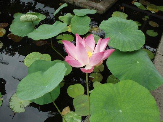 Bali Rani Hotel: Pond area
