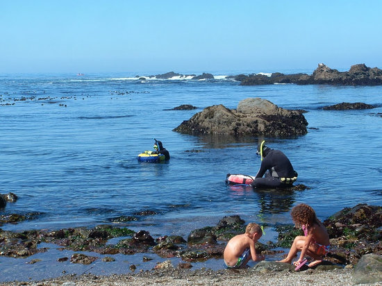 Hidden Pines RV Resort & Campground : Abalone Diving & Playing on the Beach!