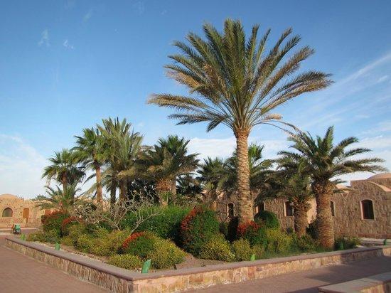 Movenpick Resort El Quseir : Hotel grounds