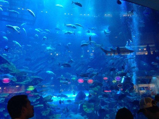 The Dubai Mall : The aquarium at the Dubai Mail
