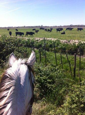 Mas de la Fouque: Promenade à cheval (à faire avec Heidi)