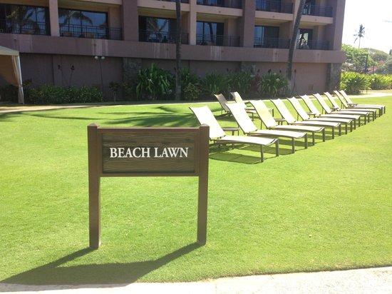 Sheraton Kauai Resort : Beach front gardens