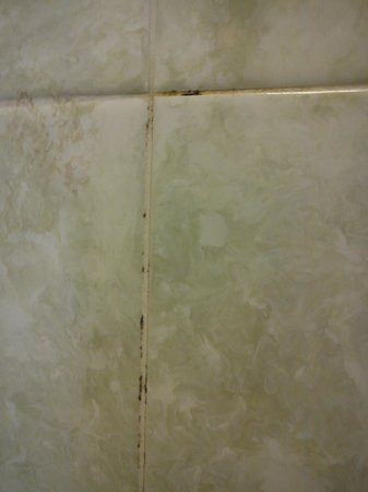 Chatsworth House Hotel: Mouldy tiles, room 258, April 2014