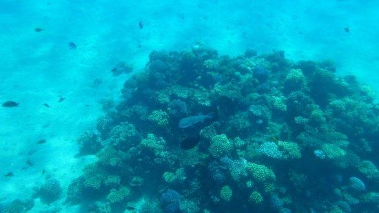 Albatros Palace Resort: на этом корале два кузова живет