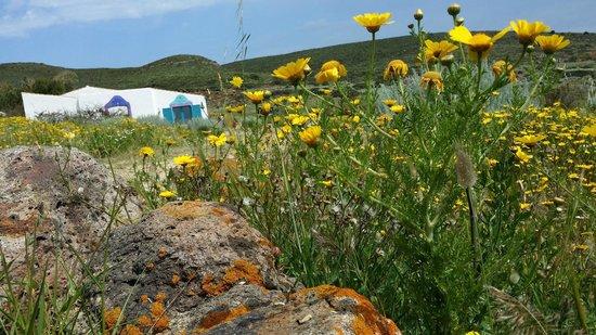 Poecylia Resort: il Poecylia e le sue bellissime margherite....