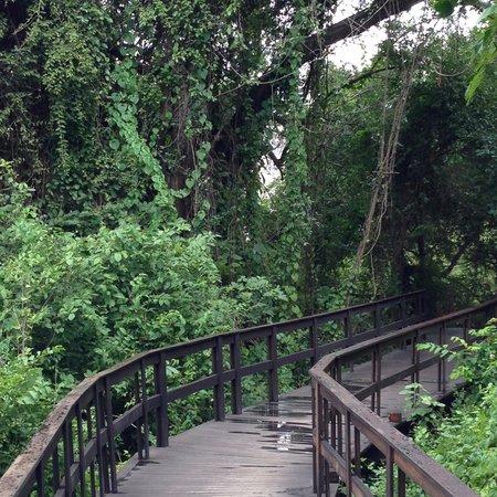 Royal Chundu Luxury Zambezi Lodges: Walkway between units on the island