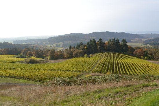 Youngberg Hill Vineyards & Inn: view of property
