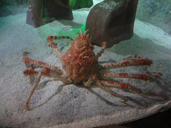 Sea Life Aquarium : Lebendig selten zu sehen