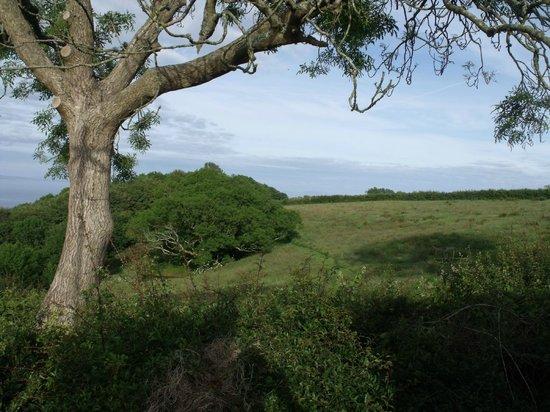 Trevayne Farm Caravan and Camping: Views