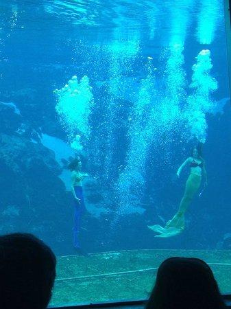 Weeki Wachee Springs : Mermaid show