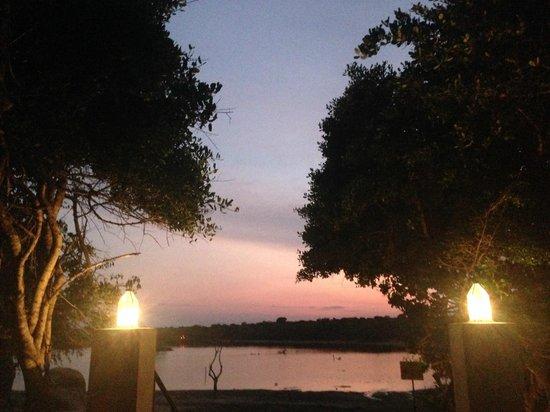 Cinnamon Wild Yala : view from the pool