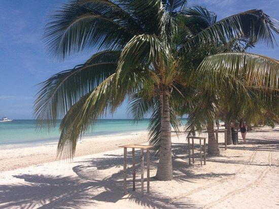Blau Marina Varadero Resort: Spiaggia visitata durante l'uscita in catamarano