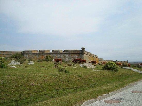 Fortaleza de Santa Teresa: Fortaleza