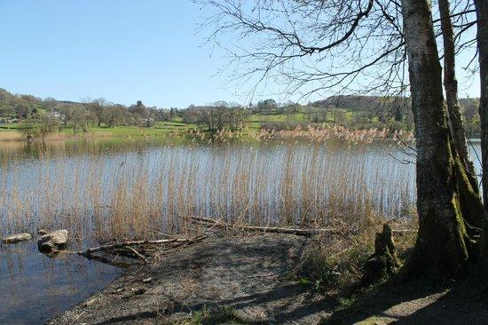 Esthwaite water trout fishery: lake walk