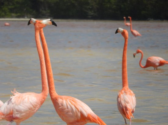 Flamingo Tours: flamingos