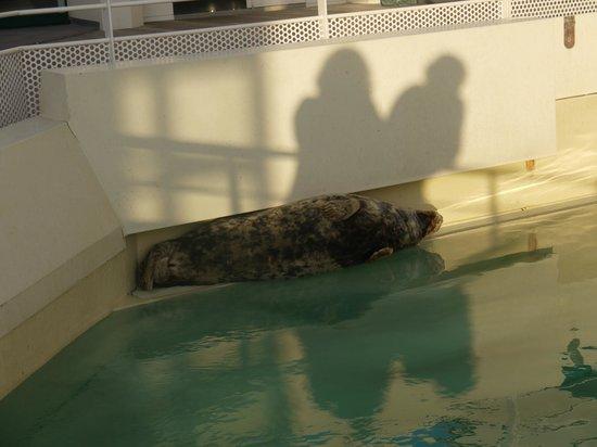 Aquarium de Biarritz : Phoque