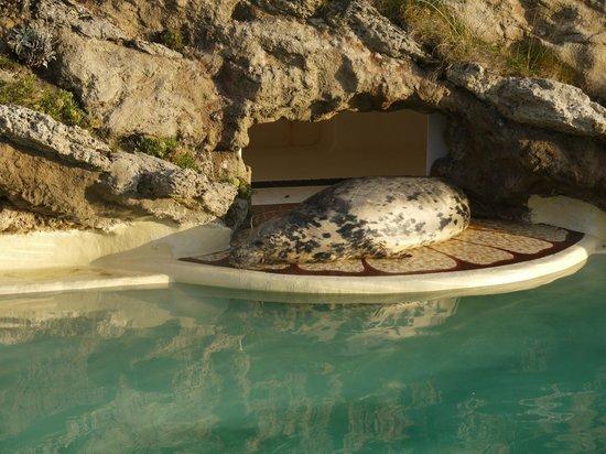 Aquarium de Biarritz : Phoque en sommeil