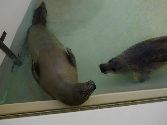 Aquarium de Biarritz : Phoque show