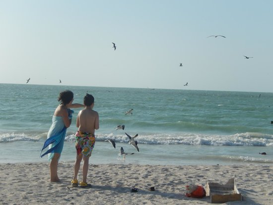 Flamingo Tours: playa de celestum