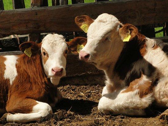 Weberhof - Urlaub am Bauernhof: Tiere am Bauernhof - Weberhof