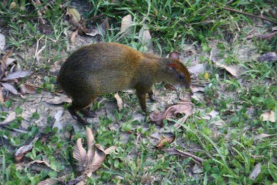 Refugio Amazonas: Wildlife
