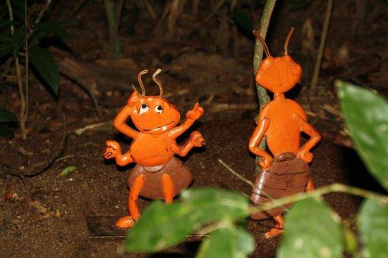 Refugio Amazonas : Ants!