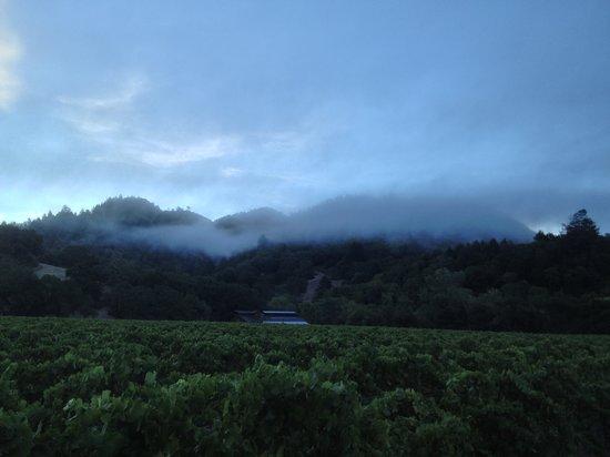 A foggy morning at Hafner Vineyard