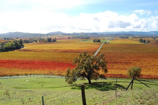 Autumn colors at Hafner Vineyard