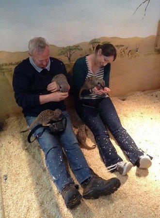 Raptor Foundation: feeding the Meerkats