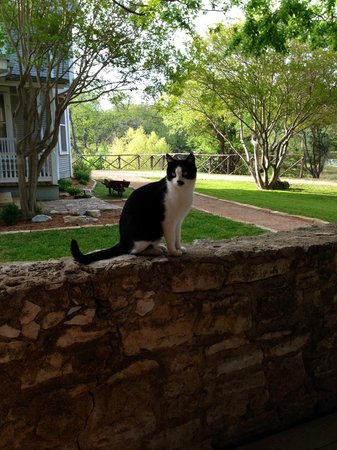 Hoffman Haus: The view from our patio and one of the kitties who live on the grounds! So friendly!
