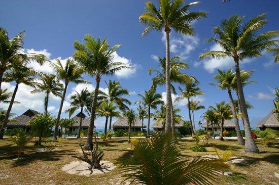 Bora Bora Photo Lagoon : Un coin de paradis