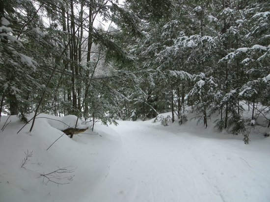 Taboo Muskoka Resort: Snowshoeing deep in the Muskoka woods