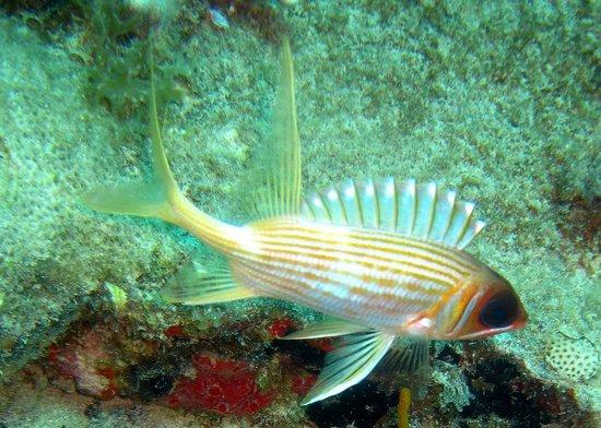 Blue Island DIvers : Lots of pretty fish