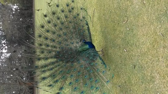 Brownsea Island: Good looking bird!