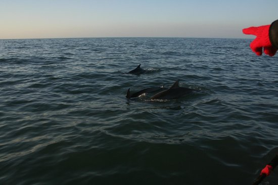 SeaMor Dolphin Watching Boat Trips: three playful dolphins came up to say hi
