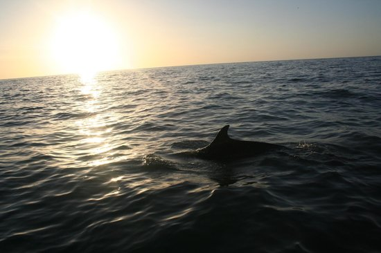 SeaMor Dolphin Watching Boat Trips: hello gorgeous