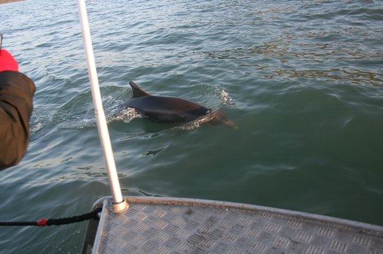SeaMor Dolphin Watching Boat Trips: hello flipper