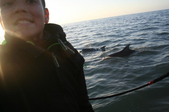 SeaMor Dolphin Watching Boat Trips: up close and personal