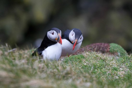 Setterbrae: Sumburgh visitors