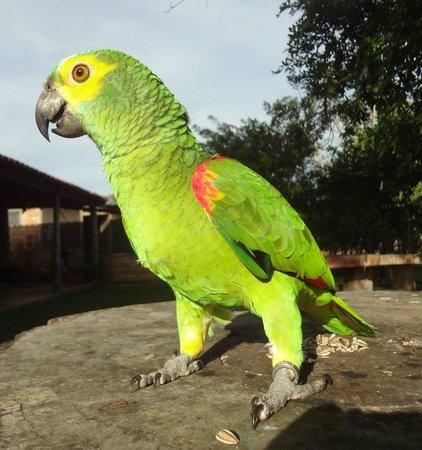 Araras Pantanal Ecolodge: Centro de recuperação de animais.